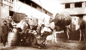Rishon barrels by Camel to Jaffa port
