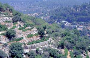 terrace vineyard